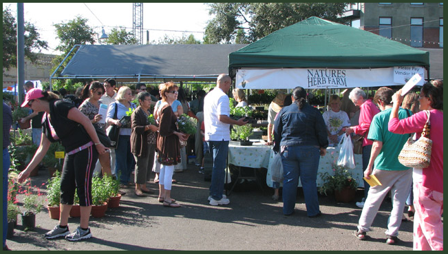 San Antonio's Fall Herb Market 1