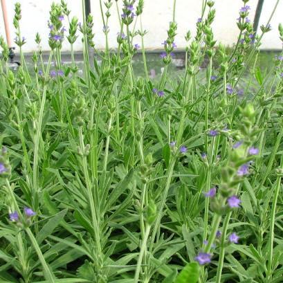 Natures Herb Farm Herbs