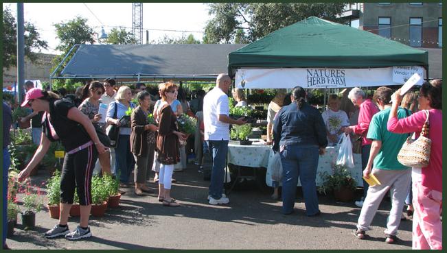 San Antonio's Fall Herb Market 1