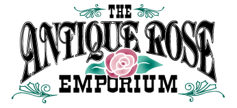 The Antique Rose Emporium